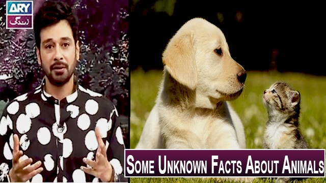 Some Unknown Facts About Animals | Salam Zindagi With Faisal Qureshi.