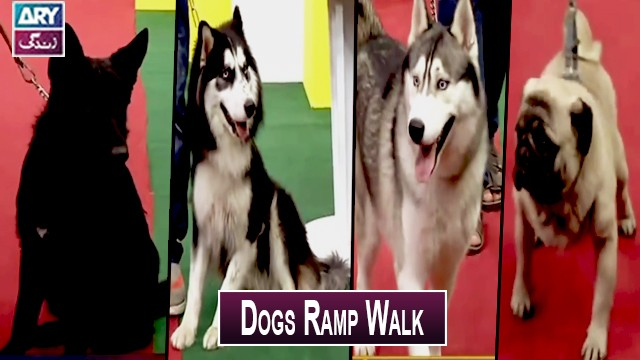 Dogs Ramp Walk | Pet Show | Salam Zindagi With Faisal Qureshi | Must Watch.